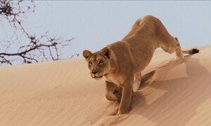 Veja truques da toupeira dourada e emboscadas das leoas famintas