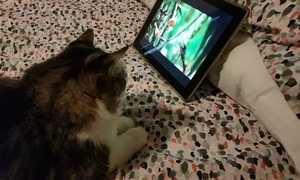 Veterinário conta quais os tipos de programas de TV favoritos dos pets