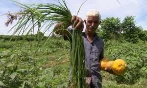 Saiba o que são as PANCs, as plantas alimentícias não convencionais