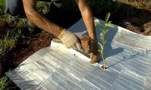 Técnica aproveita caixinhas, de leite e suco, em reflorestamento