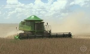 Valor de comercialização da soja sobe mais de 20% em um ano no MS