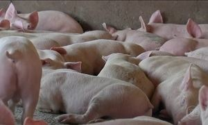 Produtores rurais tentam retomar atividades afetadas pela greve