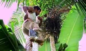 Árvore rara é principal sustento de famílias em comunidade de Ubatuba