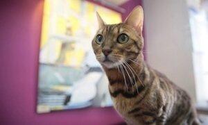 São Petersburgo, na Rússia, tem uma verdadeira obsessão pelos gatos