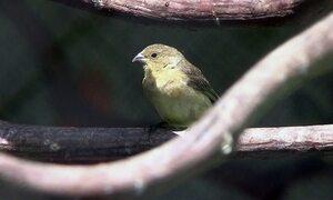 Biólogos cuidam de aves vítimas de maus tratos e tráfico de animais