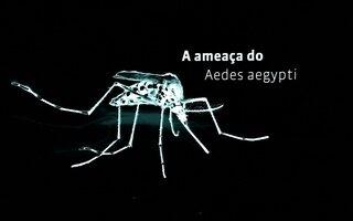 Um raio-x do Aedes aegypti, um problema mundial