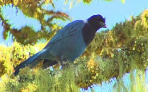 Rio Grande do Sul tem mais de 600 espécies de aves
