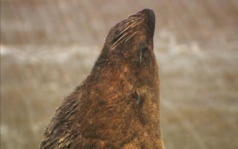 ONG estuda mamíferos aquáticos no litoral gaúcho há 20 anos