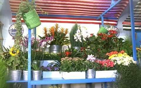Produtores apresentam novidades em feira de plantas em SP