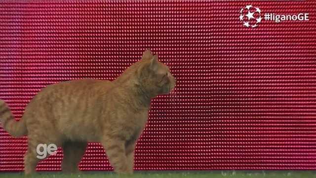 Gato invade o campo na partida entre Besiktas e Bayern de Munique pela Champions
