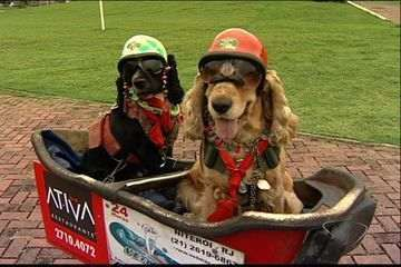 Luiz Carlos Negrini left Niteroi, Rio de Janeiro in December with his two dogs Nani and Catarina.