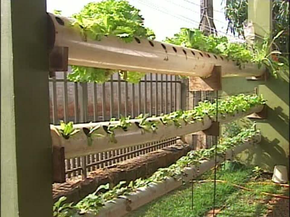 horta montada em canos de pvc  G1 Paraná  vídeos  Catálogo de