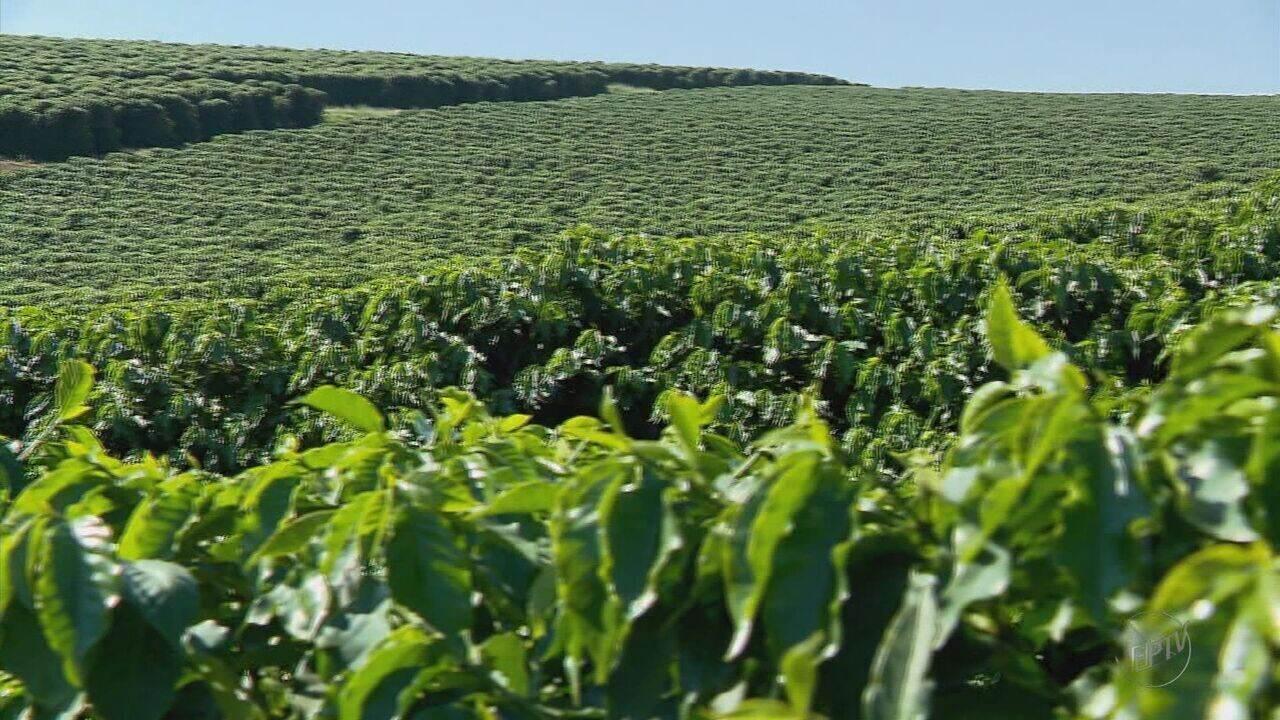 Exportações fazem café ser responsável por 48,3% das exportações de MG em 2017