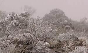 Neva nesta madrugada (28) em São Joaquim na serra catarinense