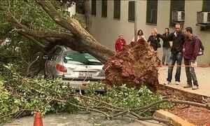 Mais de 180 árvores caíram após temporal em SP