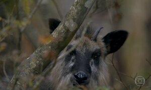 Japão, apesar de densamente povoado, tem espaço para vida selvagem