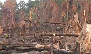 Desmatamento cresce na Amazônia após redução de verba para fiscalização