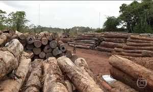 Desmatamento da Amazônia aumenta quase 30 % em 2016