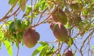 Manga palmer conquista produtores