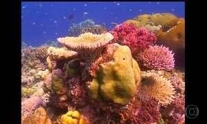 Calor no oceano mata mais de 70% do maior recife de corais do Japão