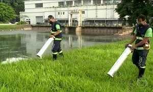 Técnicos tentam eliminar focos de pernilongo e Aedes aegypti em São Paulo