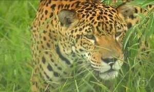 Quase 500 mil animais silvestres são atropelados por ano no Brasil