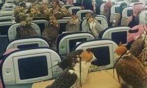 Falcões são transportados em avião de passageiro no Oriente Médio
