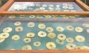 Secadora de frutas funciona com energia solar