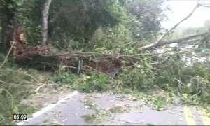 Vendaval causa estragos no litoral norte de SP