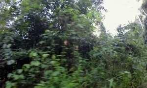 Alunos enfrentam mais de 2 horas de estrada precária até escola no Pará