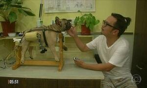 Acupuntura faz sucesso entre donos de gatos e cachorros na China