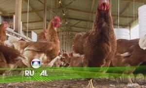 Globo Rural - Edição de 03/09/2017