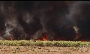 Altas temperaturas e baixa umidade provocam falta d'água e aumento de queimadas