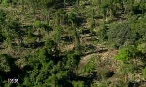 Dados do INPE mostram queda no índice de desmatamento na Amazônia Legal