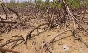 Brechas legais facilitam a destruição da natureza na região de Suape, em PE
