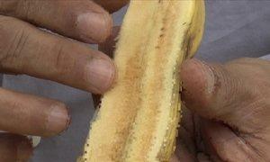 Banana-prata rosada por dentro é normal, explica cientista agrário
