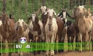 Globo Rural – Edição de 29/10/2017