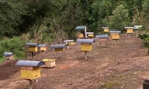 Saiba como alimentar as abelhas durante o inverno