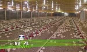 Globo Rural - Edição de 17/12/2017