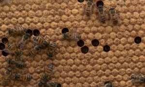 Biólogo explica como trocar os favos do ninho