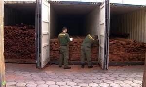 PF faz perícia em 11 mil toneladas de madeira apreendida em dezembro em Manaus