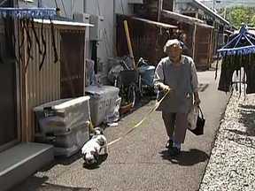 Cadela ajuda dona a escapar de tsunami no Japão - Animal da raça Shitzy indicou o caminho em direção ao lugar mais seguro da vizinhança. Um instituto japonês estuda se animais são capazes de prever catástrofes.