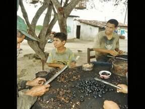 Trabalho infantil - Parte 2 - Programa fala sobre crianças que trabalham desde muito cedo. E mostra crianças que trabalham com pesca, em feiras livres e na quebra de castanha de caju.