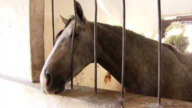 Exposição Nacional do Cavalo Mangalarga Marchador espera cerca de 150 mil visitantes - Exposição, no Parque da Gameleira, vai até o dia 28 de julho.