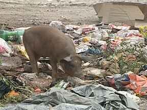 Moradores de Caxias ainda sofrem por causa do lixo - O lixão de gramacho está fechado desde junho, mas a situação na região não melhorou como os moradores esperavam. Em um galpão, bem perto do antigo aterro sanitário, caminhões da empresa Locanty despejam toneladas de lixo todos os dias.