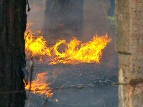 Incêndio florestal atinge cerrado - A torre digital quase sumiu no meio da fumaça que atrapalhou um pouco o trânsito de quem passava pelo trecho que liga Sobradinho ao Paranoá. As chamas destruíram tudo.