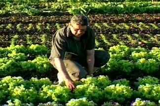 Paraíba se destaca no cenário nacional de produção de alimentos orgânicos - Alimentos orgânicos não levam venenos ou agrotóxicos para combate de pragas durante produção.