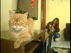 100 gatos estão à espera de novos donos - A gente mostrou há alguns dias que mais de 200 gatos que moravam na mesma casa, precisavam ser adotados. Foi feita uma feira de adoção e alguns bichos já estão de casa nova