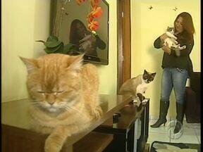 Oitenta gatos são adotados em feira - Outros cem ainda esperam por um novo dono. Os animais eram tratados por uma voluntária que sofreu um acidente e está internada em estado grave num hospital