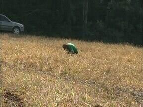 Agricultores do sudoeste são os primeiros do Estado a antecipar o plantio do milho - Mas o trabalho mal começou e eles já tiveram de interromper o cultivo por causa da falta de chuva.